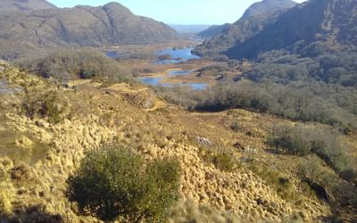The lakes of Killarney from Ladies' View