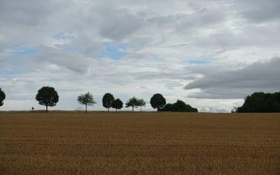 Fields, trees and big sky near Rosières-en-Haye (Lorraine)