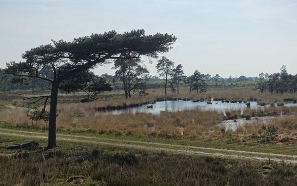 Grenspark De Zoom Kalmthoutse Heide (Flanders)