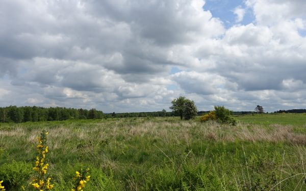 Peatland of Fagne de Malchamps (Wallonia)