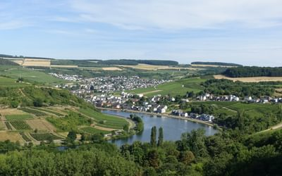 Vineyards around Machtum (Luxembourg)