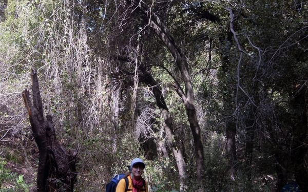 Springtime in north Jordan, exploring the route for the Jordan Trail through forested Wadi Zubia.