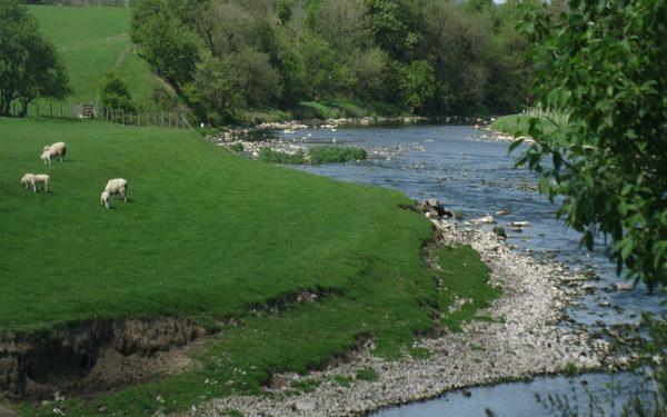 The River Ribble near Edisford - along the Ribble Way