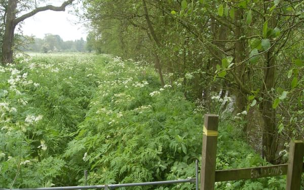Overgrown public footpath
