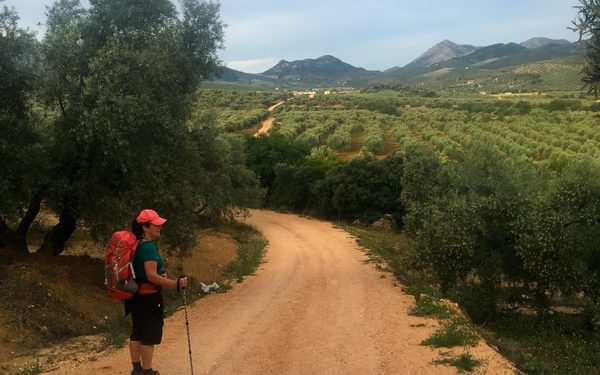 Starting into olive country south of Archidona