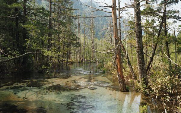 J7 Pristine wetlands around Kamikōchi
