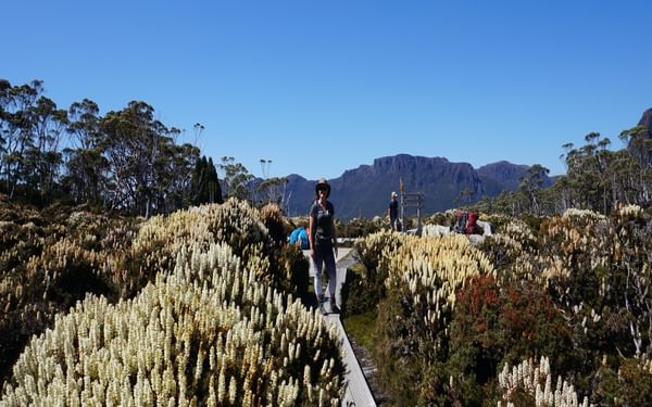 Spectacular plant life at the foot of Mt. Ossa