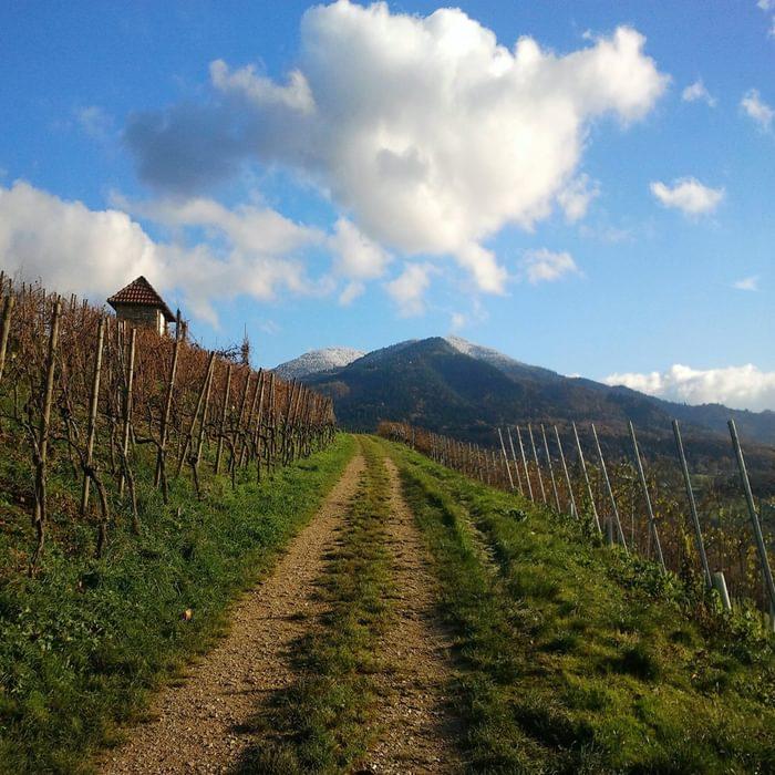 010 Vineyards in Markgräflerland, with the Hochblauen in the distance