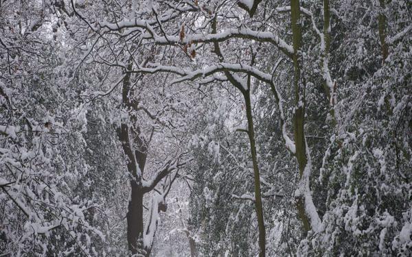 Bush Wood in winter