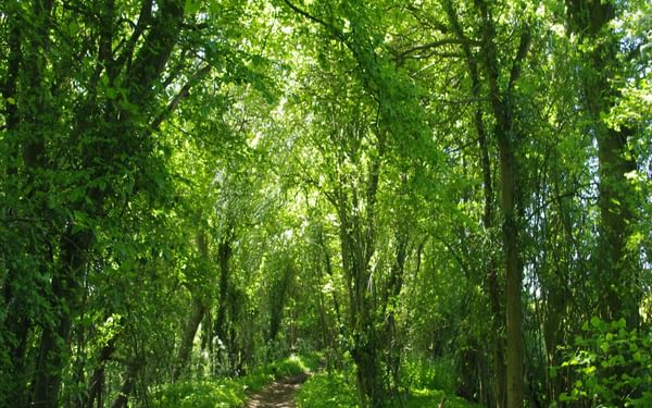 Essex has many hundreds of miles of green lane