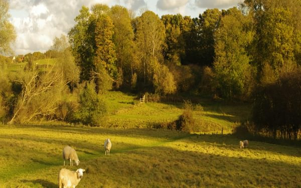 Sheep pasture by Wignall Brook, below Lawford