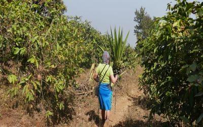 Descending Pico de Fogo through coffee plantations