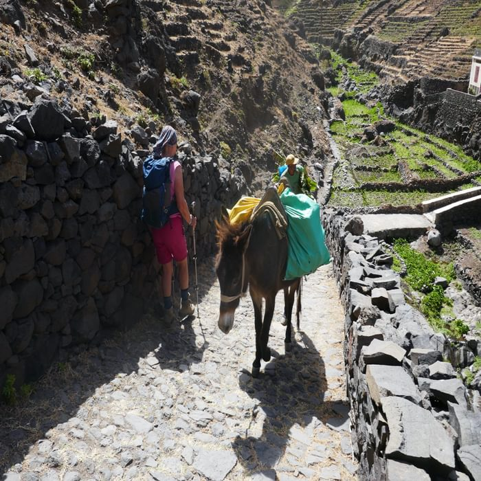 4-15 In Santo Antao, donkeys are used to transport crops down steep tracks
