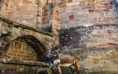 Donkey In Conques