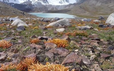 Resilient plants at 4600m