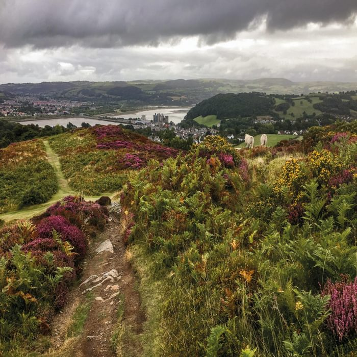 Conwy from Conwy Mountain