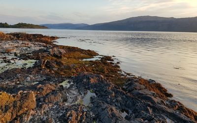 The low rocky coast of Mull is perfect otter habitat