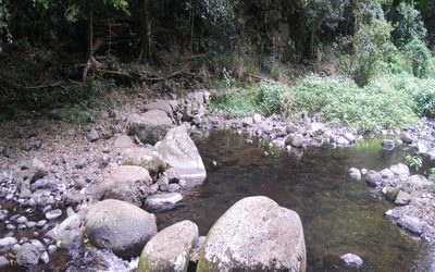 One of the nine creek crossings on the West Canungra Creek circuit, this one ideal for rock- hoppers when the water is low