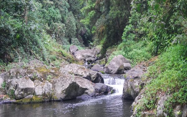 West Canungra Creek in its deep, lush and thickly forested valley