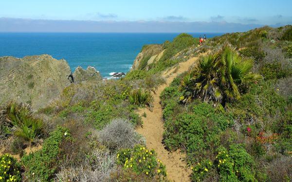 Shrub bordered sandy path on the west coast Walk 32