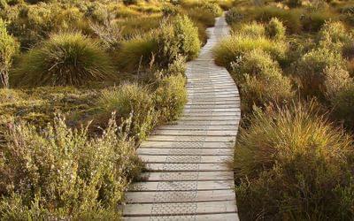 sinous boardwalk