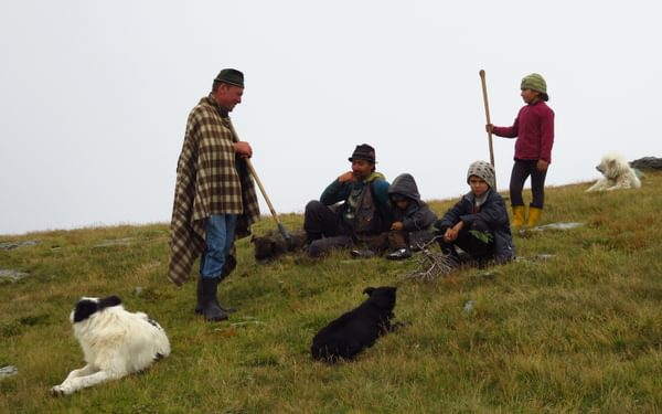 A shepherd family