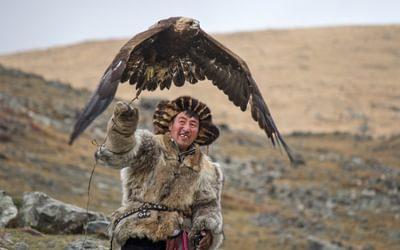 Steppe eagles