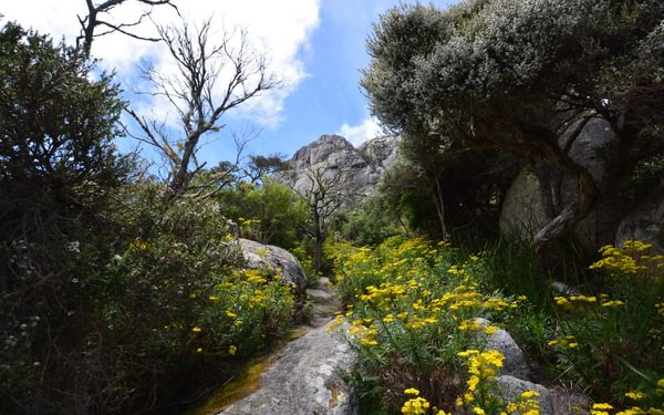 dense vegetation Mt Strzelecki