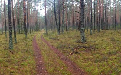 forest near Puvočiai