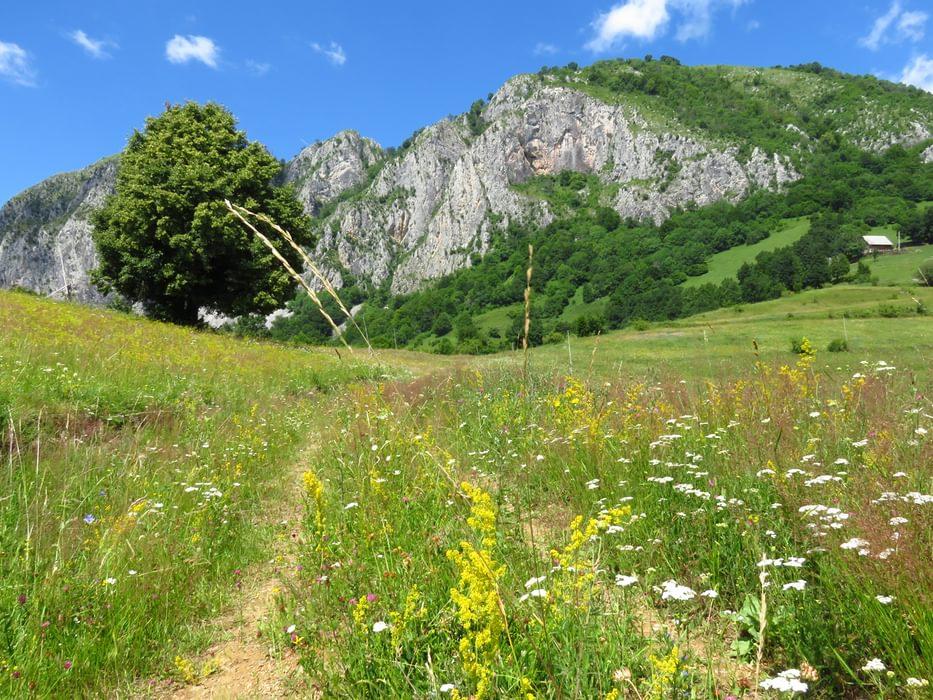 Trascău Mountains