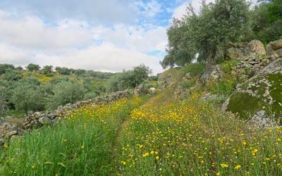 A footpath through flowers in Extremadura
