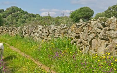 A track in Extremadura