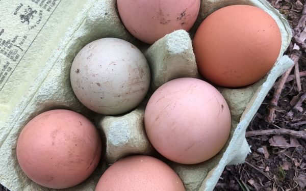 Eggs from the neighbours