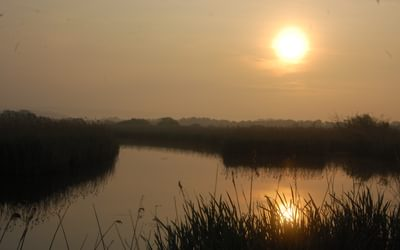 Peat fen at Westhay, Somerset Levels