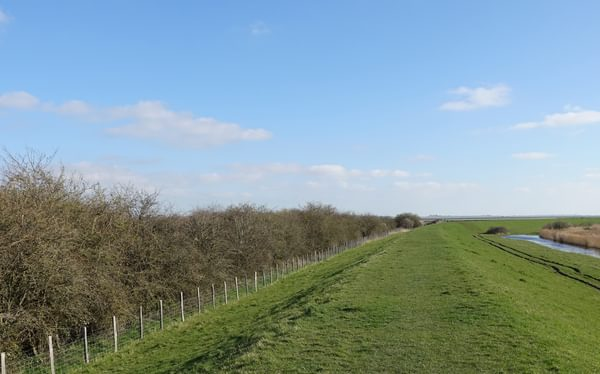 Leaving Conyer - Blackthorn and scrub