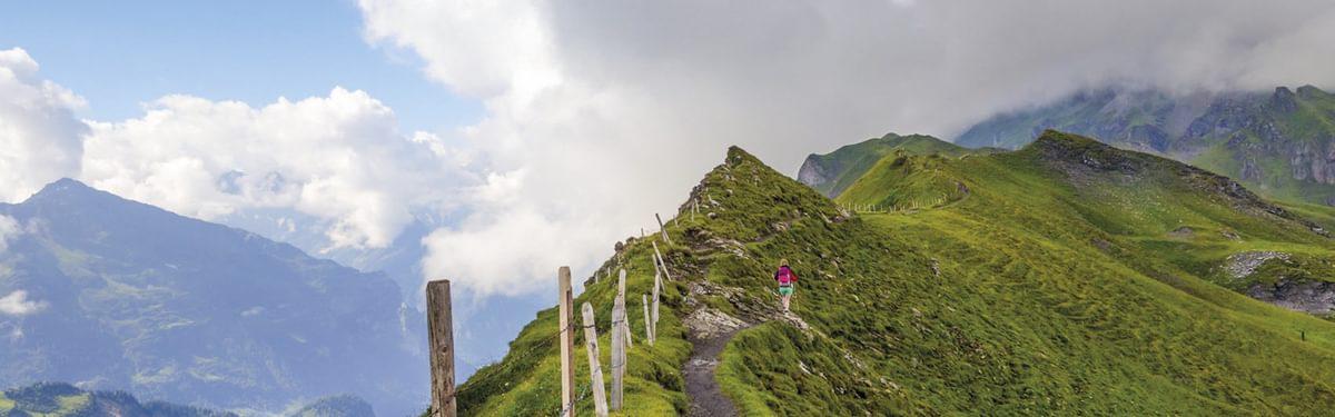 Grassy Erzegg Planplatten Ridge Cover