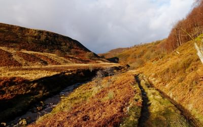 Landside  Clough In The  Upper  Derwent  Valley