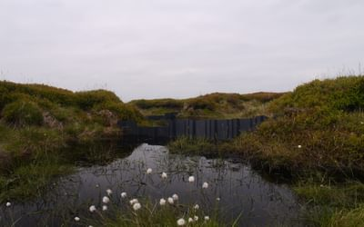 One Of The Thousands Of Dams Blocking Moorland Goughs To Regenerate The Peat Bog