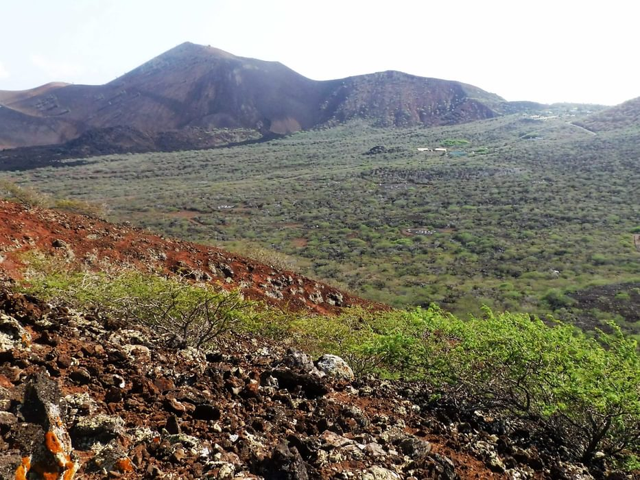 Mexican Mesquite Bushes Have Spread Across The Land Between Volcanic Cones