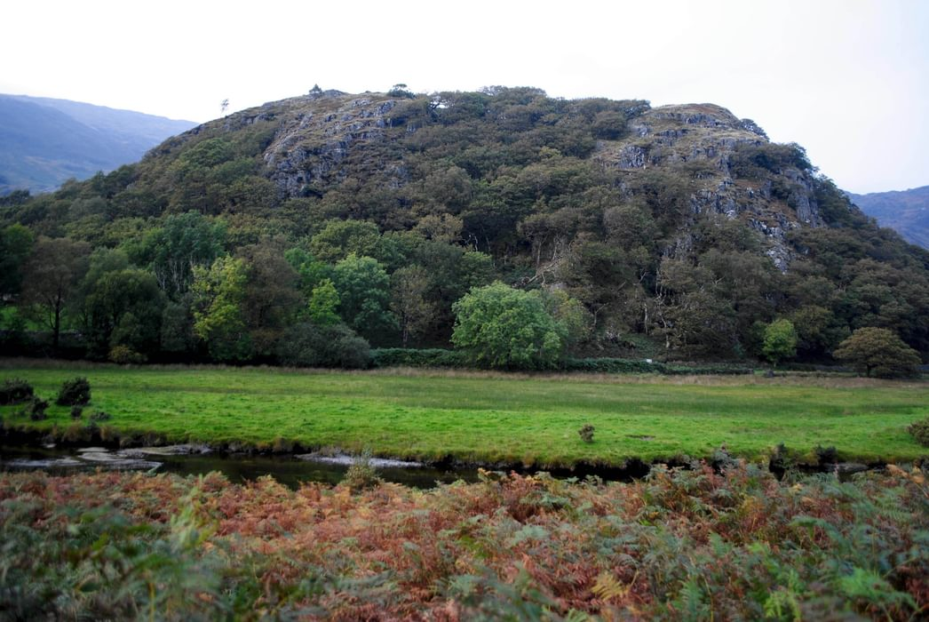 Dinas  Emrys The Hill Where  Merlin Uncovers The Red And White Dragons