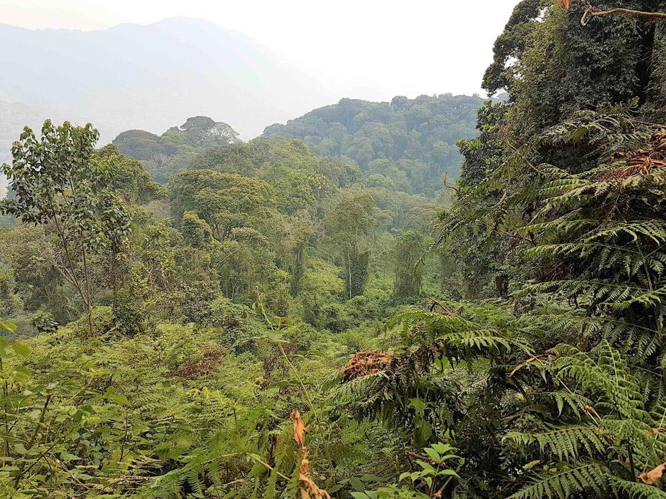 Rainforest  In  Rwandas  Nyungwe  National  Park