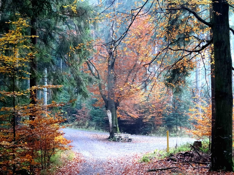 Deep In The  Black  Forest On  Germanys  Westweg