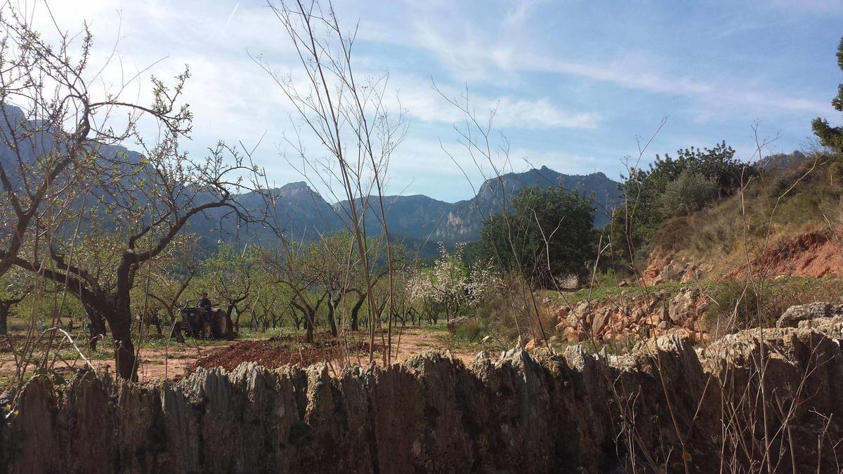 Montaspre Ridge Trees And Fields