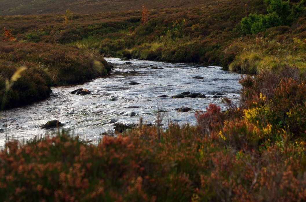 River  Nethy  Cairngorms