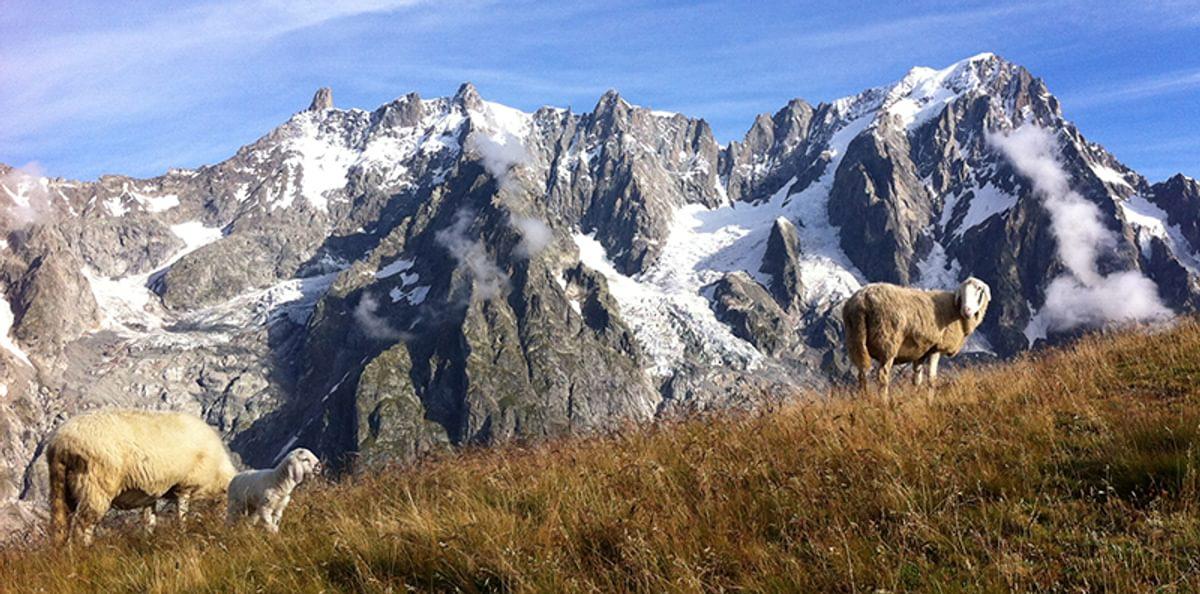 55 1  Day 6  Mont De La  Saxe Sheep800