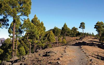 Near Pico de las Ovegas on La Palma