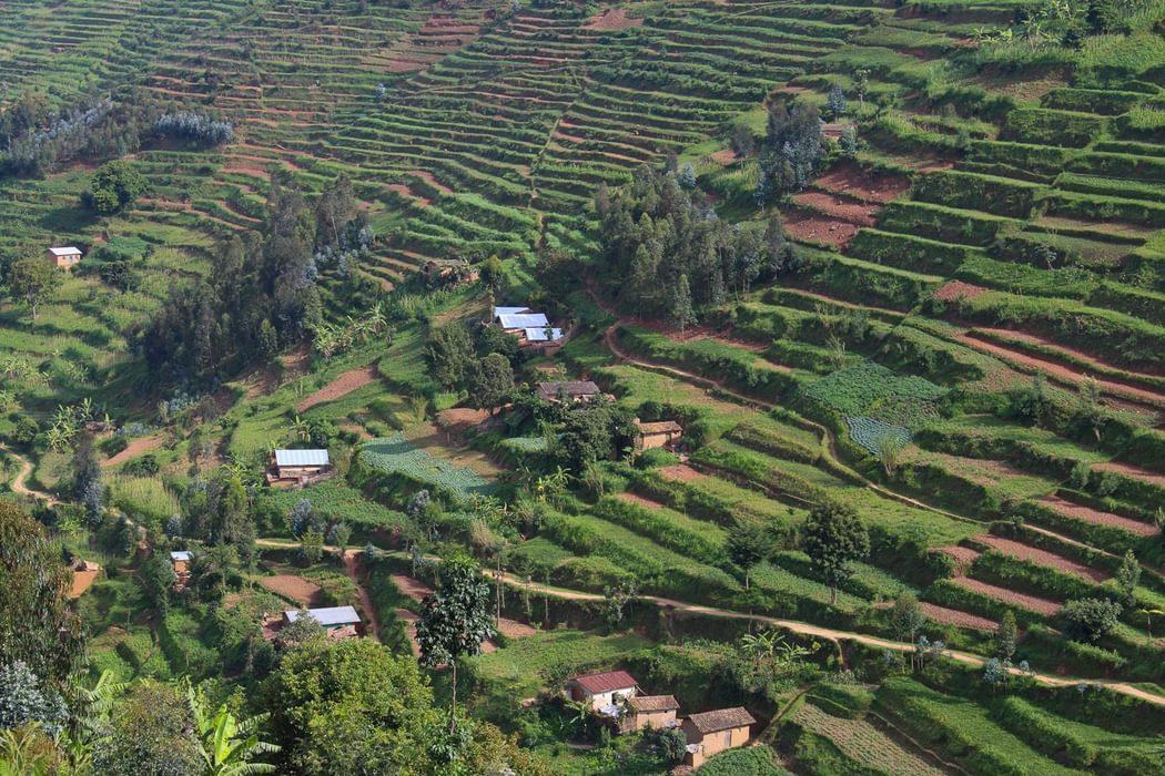 terraced slopes