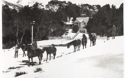 Horses in the snow outside Waldheim 1929 F Smithies Collection Tasmanian Archives NS57341019