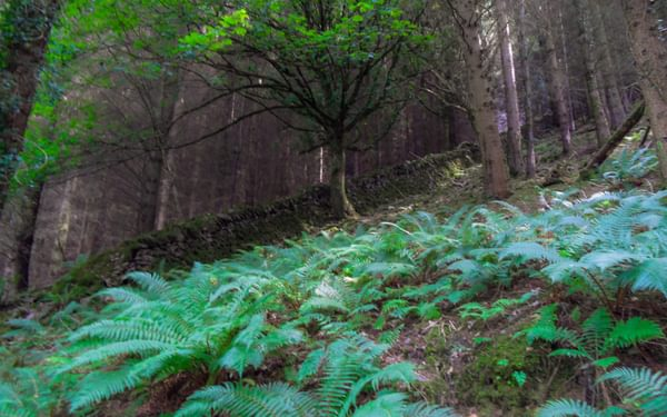 Solo walking through steep wooded banks
