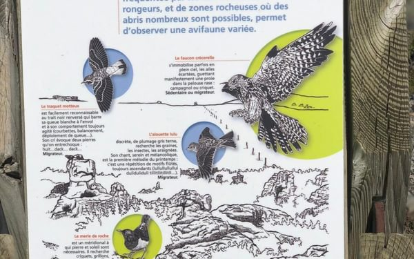 Birds of the causse